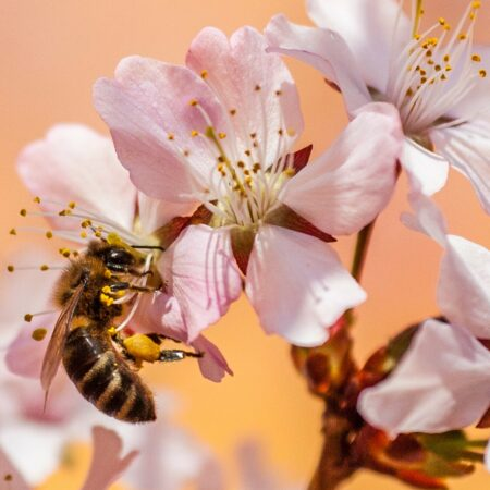 Honig vom Imker Achim Betz